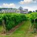 Winemaking In Argentine